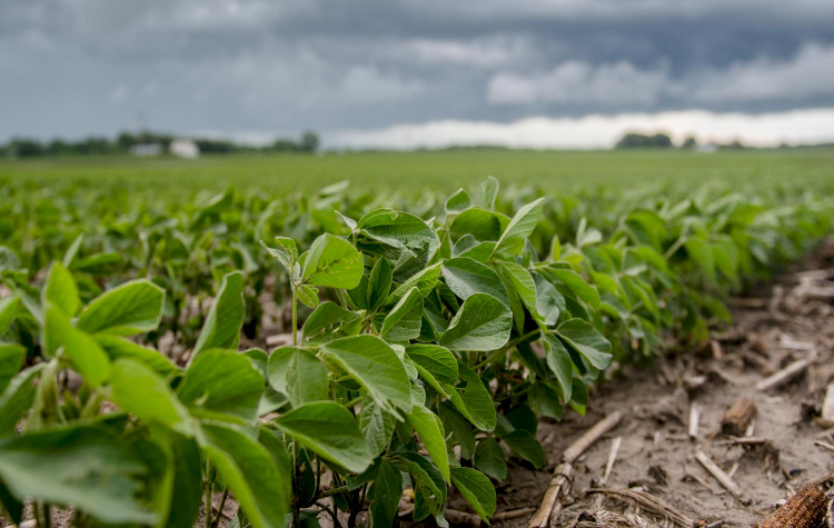 American soybean; chinese imports